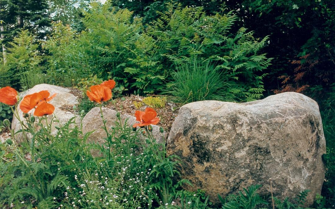 11 St Adèle Simonetta ensemble végétaux printemps
